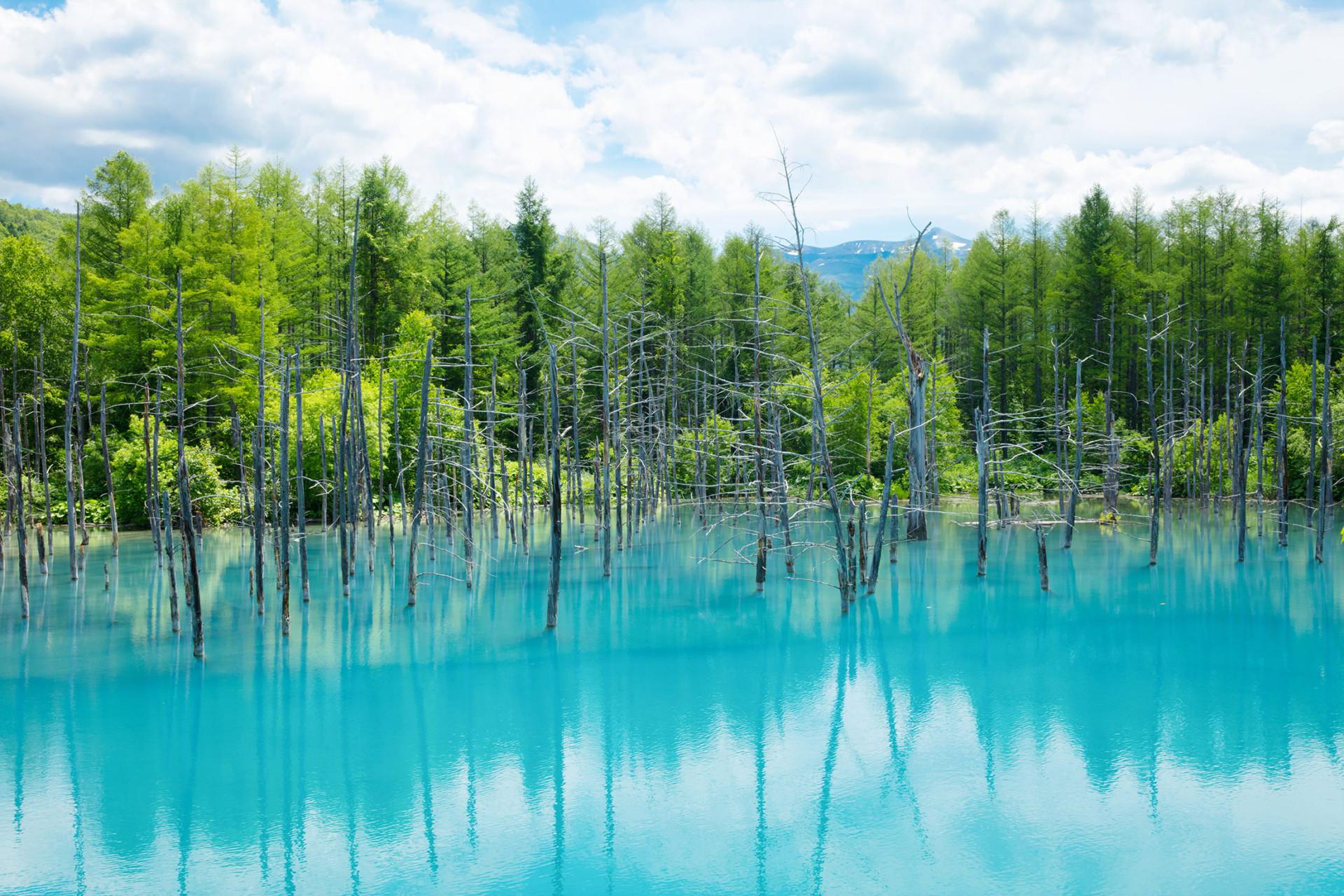 Shirogane Blue Pond